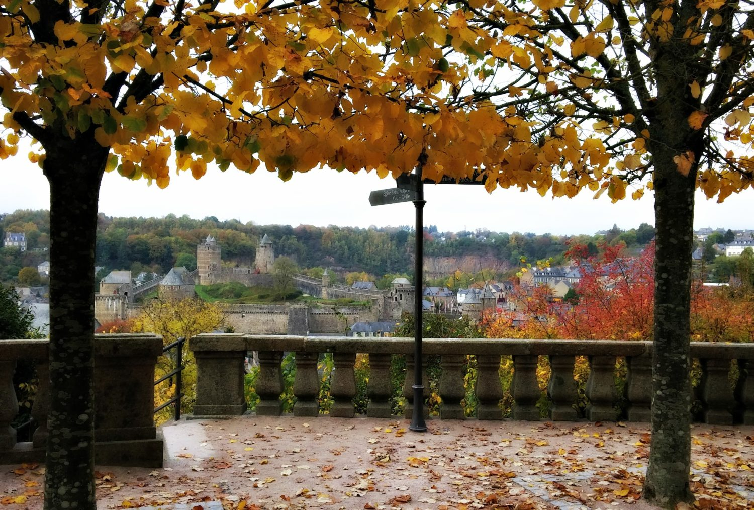 fougères autumn
